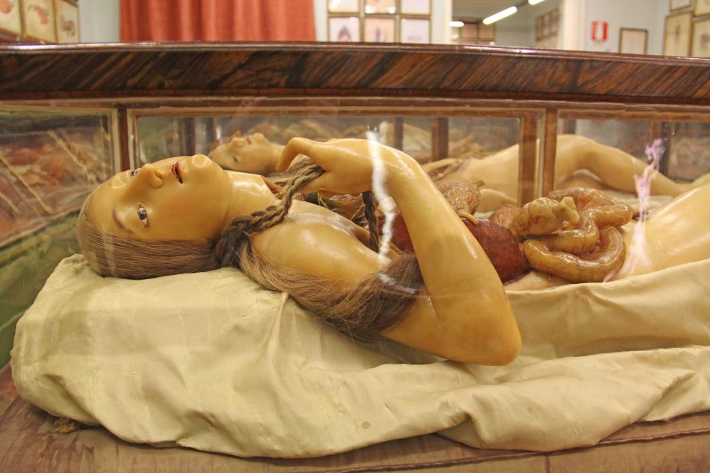 Wax anatomy models in a museum in Florence