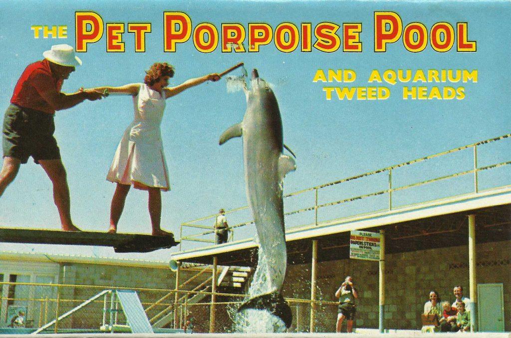 Pet_Porpoise_Pool